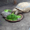 Can Turtles Eat Parsley? (Nutrients & Benefits)