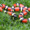 Are Milk Snakes Poisonous? What You Need to Know!